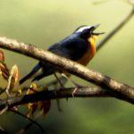Birding tour in Bhutan